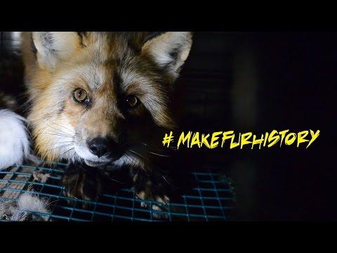 Exposing the Fur Industry