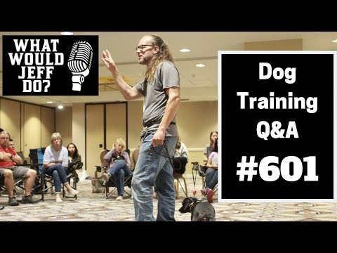 dog-training---stop-dog-pulling---dog-growling---what-would-jeff-do?-q&a-ep.601-(2019)