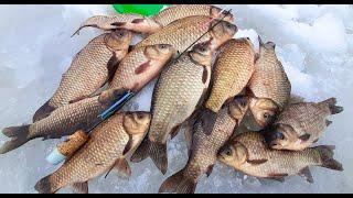 НАШЛИ ЛУЖУ С КАРАСЕМ ЛОВЛЯ КАРАСЯ ЗИМОЙ зимняя рыбалка на карася