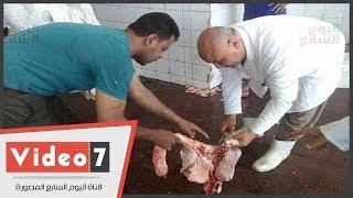 نرصد ذبح المواشى بمجزر كفر الشيخ وإجراء الكشف الطبى عليها