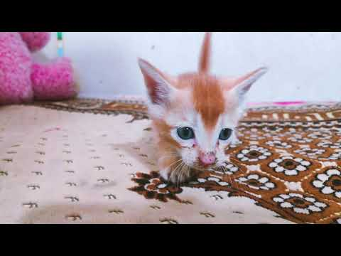 Baby Cats - Cute and Funny Cat Videos Compilation | #BABYCAT