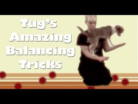 Tug's amazing balancing dog tricks