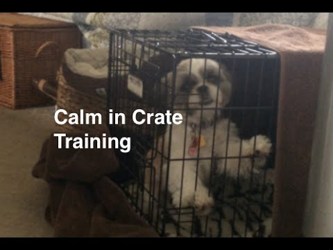 How To Crate Train Dogs And Puppies For Calm Crate Behavior