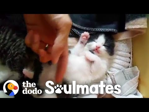 Pretty Stray Cat Gives Birth Under A Guy's Bed | The Dodo Soulmates