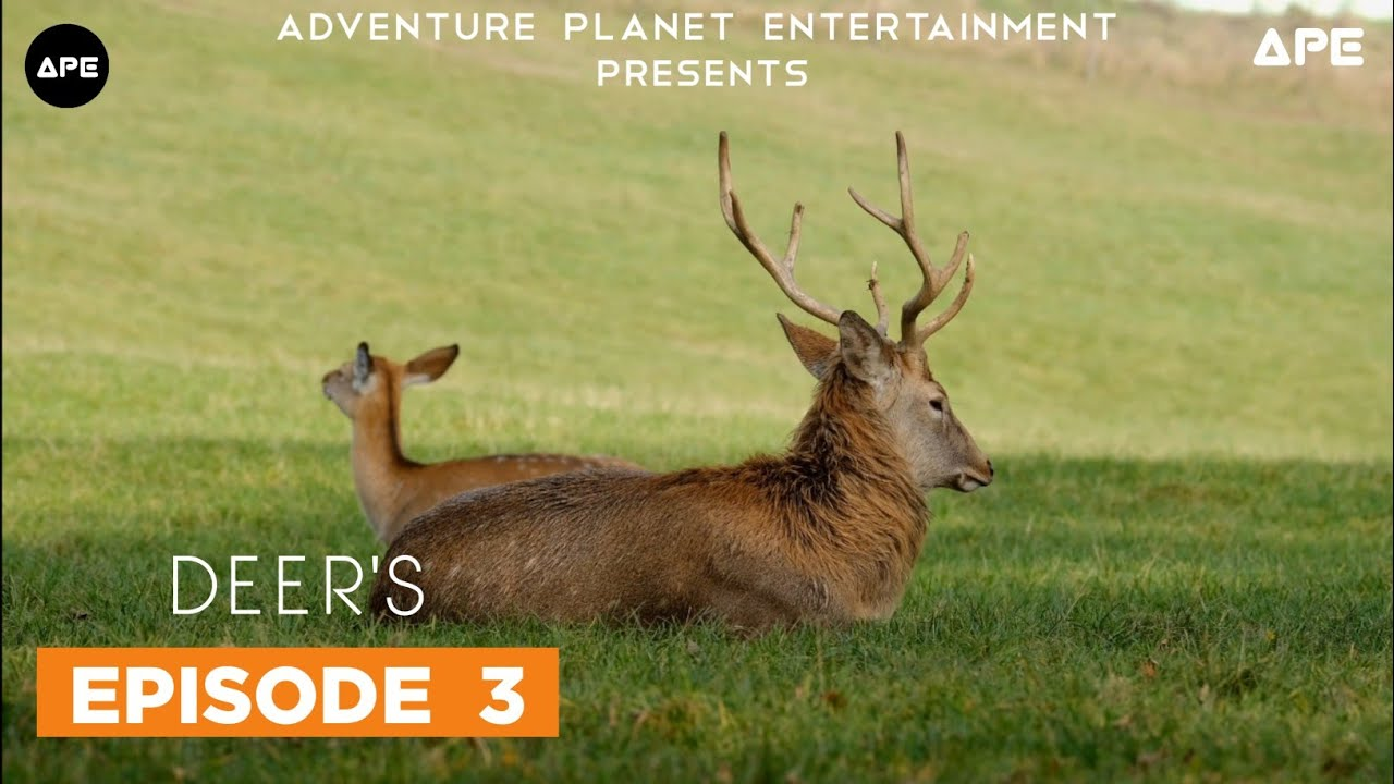 Download Wildlife - The Story Of Animal's  | Ep-3 | Deer's & Monkey's