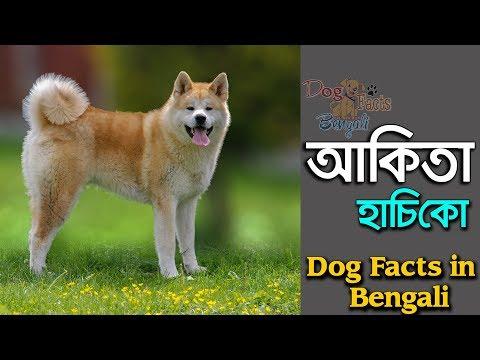 Akita dog breed facts in Bengali | Hachiko Dog | Popular dog breed | Dog Facts Bengali