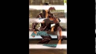 Пижама зимняя женская купить(, 2014-12-03T19:06:36.000Z)