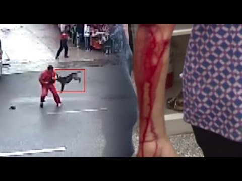 Perro Endemoniado Ataca 23 Personas en China   Noticia Cristiana