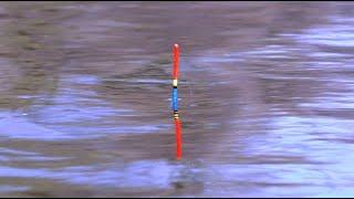 Рыбалка на поплавок, разведка. Охота на краснопера и плотву.