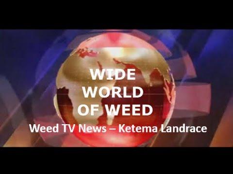 Wide World of Weed Ketama landrace