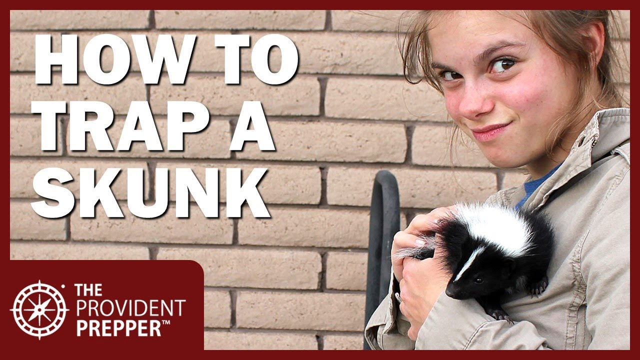 How to Safely Catch a Skunk in a Live Trap and Release It