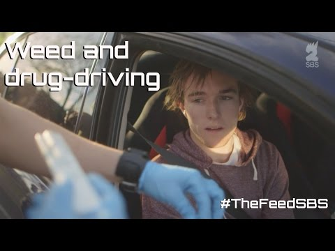Weed and drug-driving - The Feed