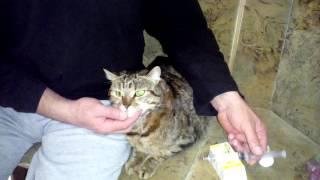 Как правильно коту давать таблетку