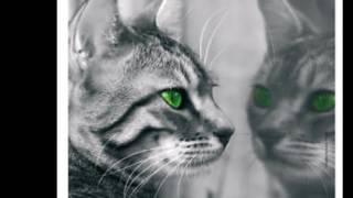 Warrior Cats Forum Charakter Themes (Wonderland)