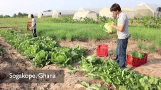Volta Presentation: The Challenges of Organic Farming in Ghana