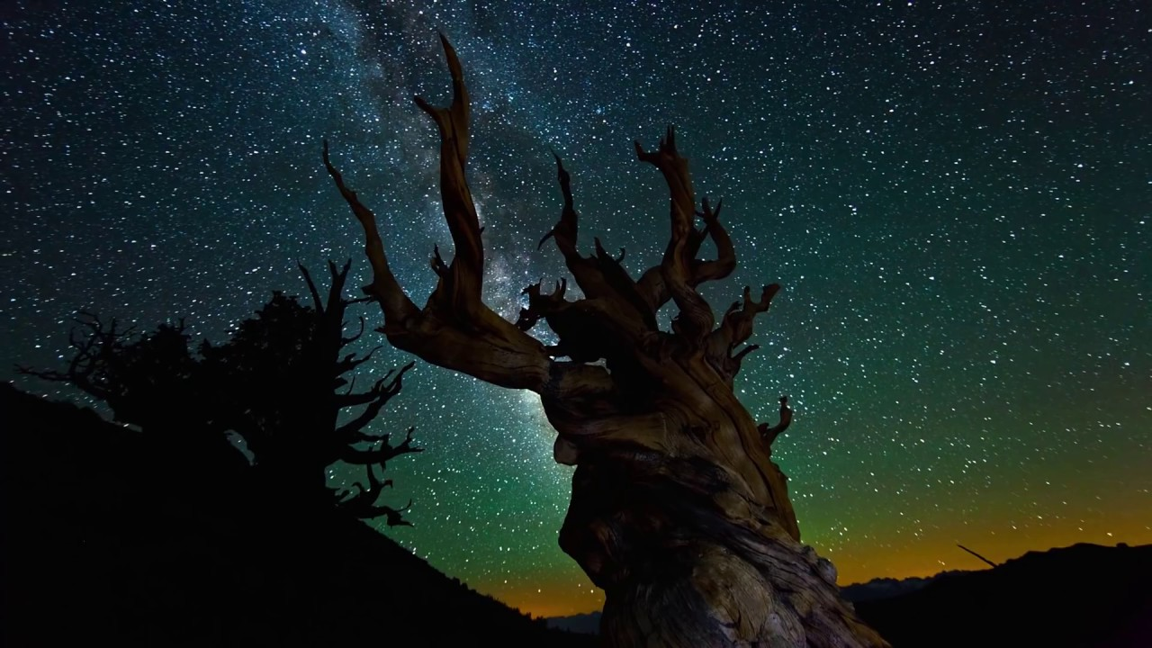 Nature at Night [4K][2160p] - YouTube