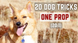 20 DOG TRICKS ONE PROP (20:1)  Icelandic Sheepdog Sara (Specialty Title by Do More With Your Dog)