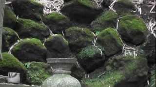 鎌倉古寺百選ー鈴木大拙師の「松ヶ岡文庫」がある東慶寺の墓所★5