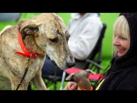 Race The Wind 39 - Sloughi Dog Show (Lorch/Gemany) • Greyhound Galgo Windhund Saluki Arab Orient