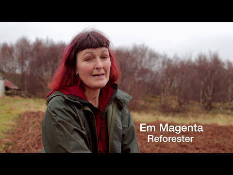Reforesting Scotland / Planting Trees / Rewilding Britain / Trees for life