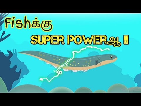 How eels produce electricity | electric  fish | tamil | explanation