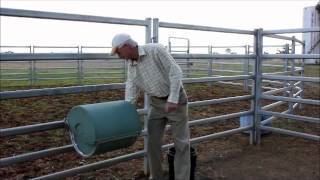 Feed Whiz Automatic Horse Feeder