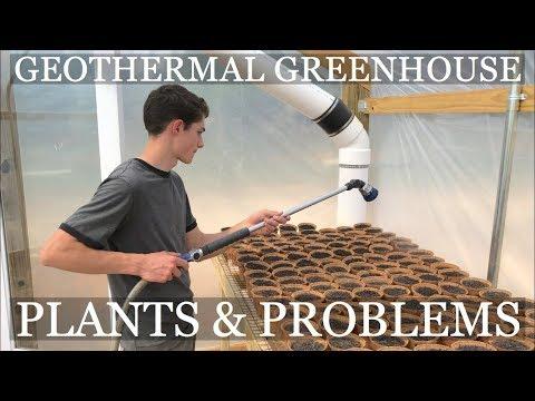 DIY Geothermal Greenhouse Pt 9: PLANTS & PROBLEMS