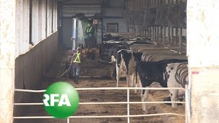 China's New Mega-Farms Bring Profit, Pollution | Radio Free Asia (RFA)