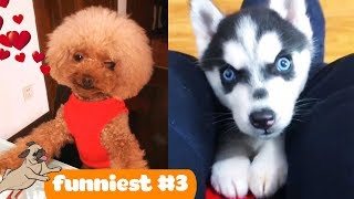 Funny Cats and Dogs Videos | Dog Love #3 | Cute Animals Doing Funny Things