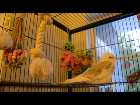 Bird Cage Tour!