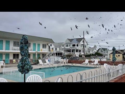 Swarm-of-Birds-Have-a-Pool-Party-ViralHog