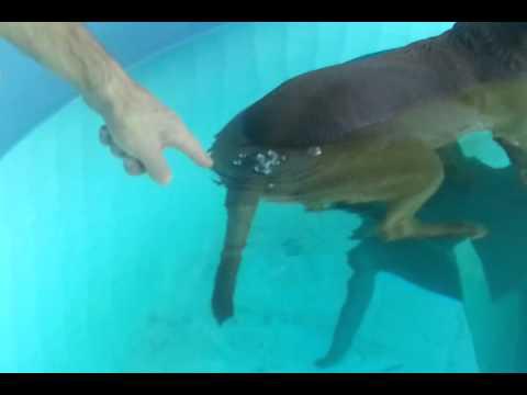 dog farts in swimming pool youtube