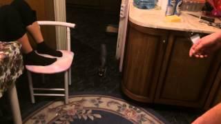 Кошка ест ржака смотреть всем