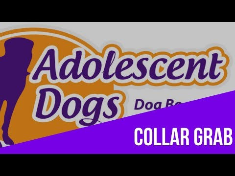 Dog Training Tutorial - Teaching the Collar Grab thumbnail