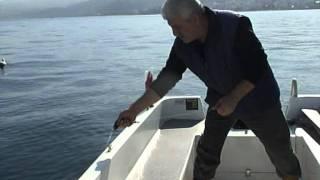 Sansürsüz tekneden tirsi ve istavrit avı