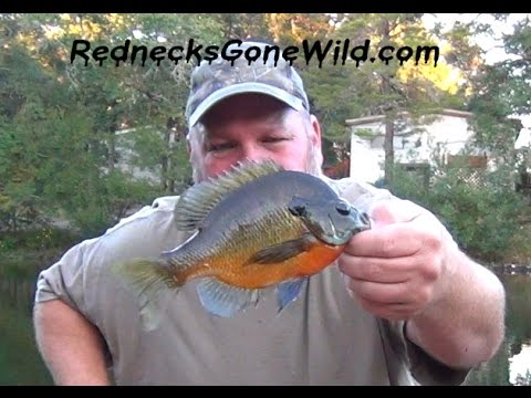 Fishing for bluegill at indian mounds on toledo bend for Fat fish blue toledo