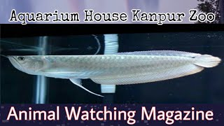Aquarium House Kanpur Zoo || Animal Watching Magazine