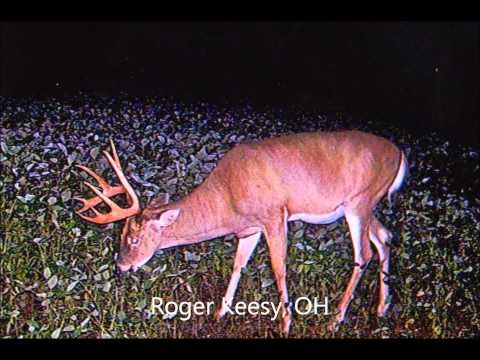 Lucky Buck's Trail Cam Collection (May 2012)