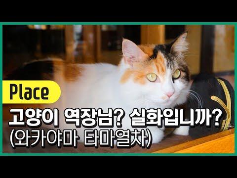 고양이 역장 본적있어? 와카야마현 타마열차!