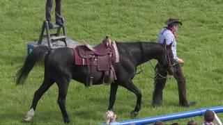 Pokaz koni