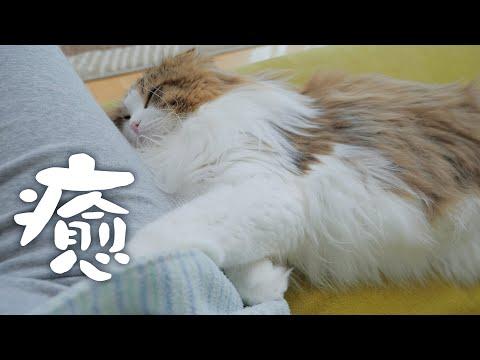 休校延長で疲労困憊のママの疲れを癒してくれるもふ猫に感謝