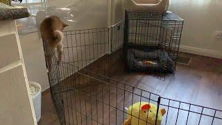 Not a Pretty Prison Break    ViralHog