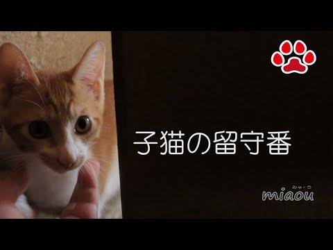 """置いていかないでー。子猫まや【瀬戸のまや日記】 """"Don't leave me alone!"""" Meowing a kitten, Maya"""