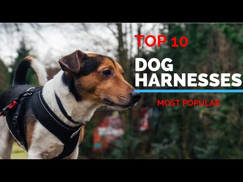 10 Best Dog Harnesses 2019 | Best Selling Harness for Your Dog