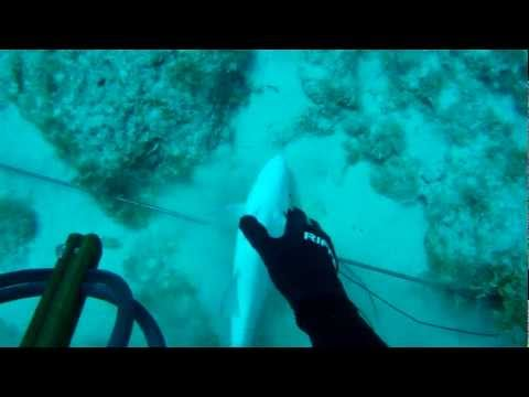Freedive Spearfishing Jupiter, FL