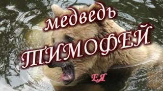 Танцующий медведь  Адыгея. Качество HD-1080.