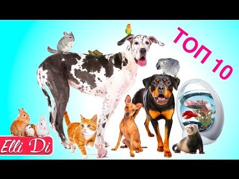 ТОП 10 ПОПУЛЯРНЫХ ДОМАШНИХ ЖИВОТНЫХ | Собаки или кошки? Рыбки или кролики? Elli Di Pets