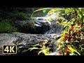 【4K】自然音に癒される「60分」 滝の映像と音(作業用BGM)