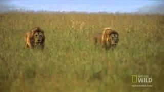 Законы природы Львов