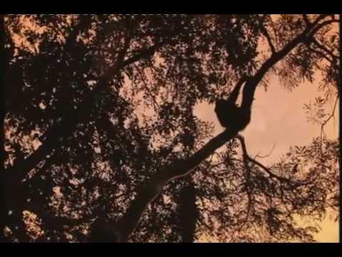 The Link - Darwinius Masillae - Ida Documentary - 5 of 6 BBC (23 of 30) ORKUT Community and Profile